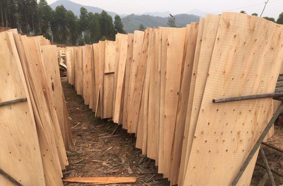 Ván lạng chuẩn bị làm Plywood